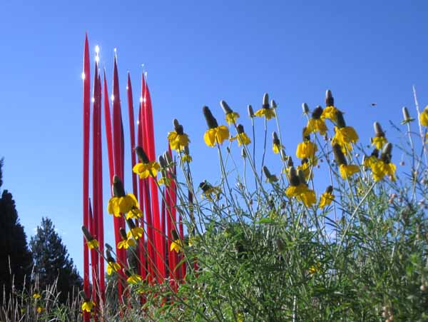 Chihuly at DBG 2014 - Red Reeds (2)