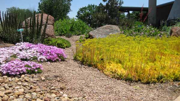 13-06-18 Adams Cactus Garden (25)