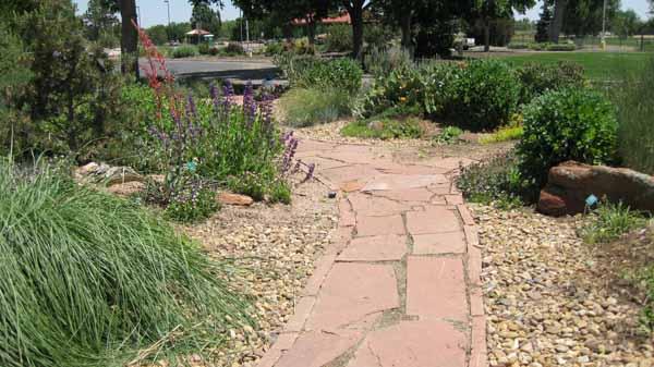 13-06-18 Adams Cactus Garden (28)