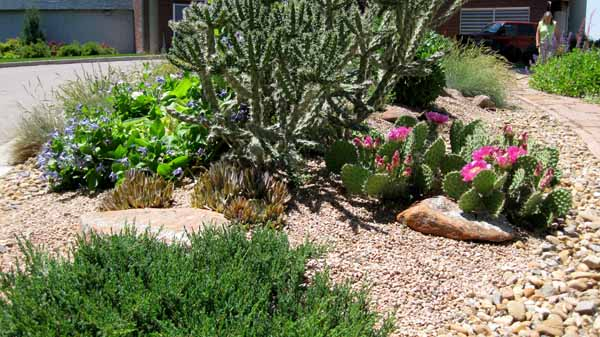 13-06-18 Adams Cactus Garden (4)