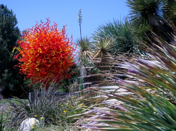 Chihuly at DBG 2014 - Summer Sun (8)