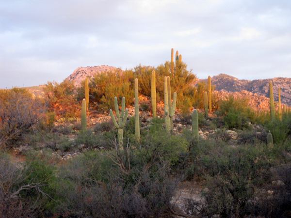 14-12-06 Catalina State Park -006