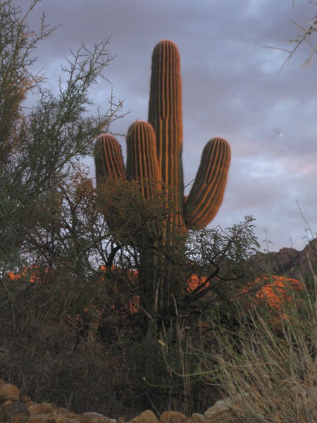 14-12-06 Catalina State Park -008