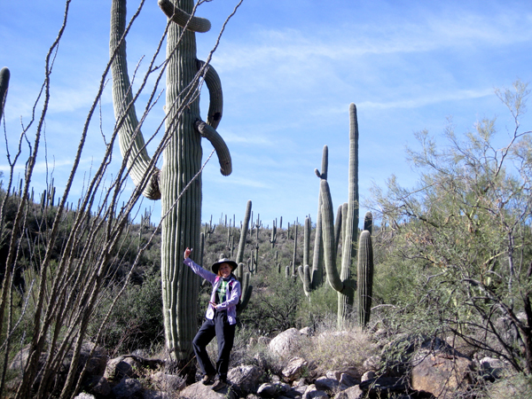 14-12-11 Sabino Canyon - Phoneline Trail -004
