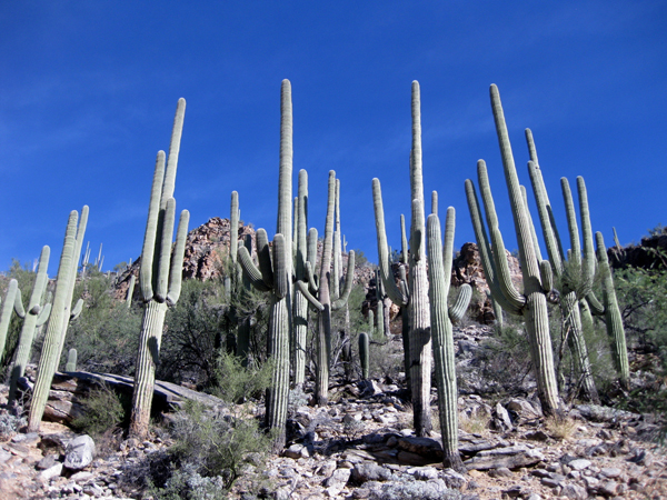 14-12-11 Sabino Canyon - Phoneline Trail -007