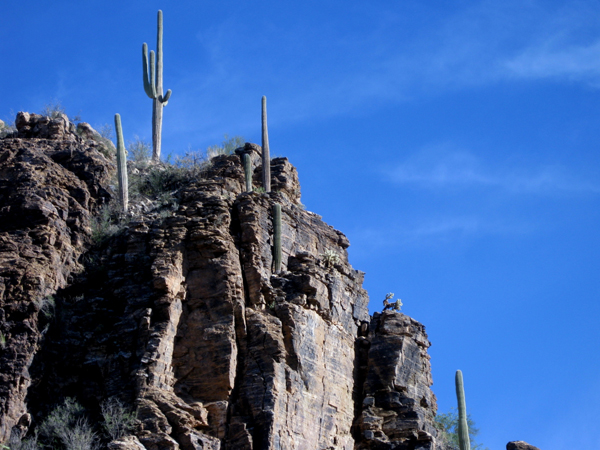 14-12-11 Sabino Canyon - Phoneline Trail -009