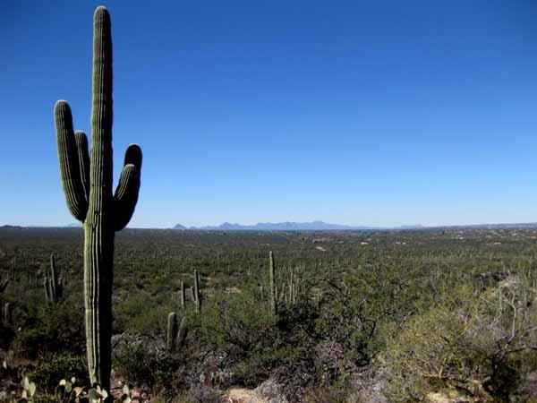 14-12-26 Saguaro NP-East, Douglas Spring M&M -002