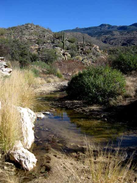 14-12-26 Saguaro NP-East, Douglas Spring M&M -013