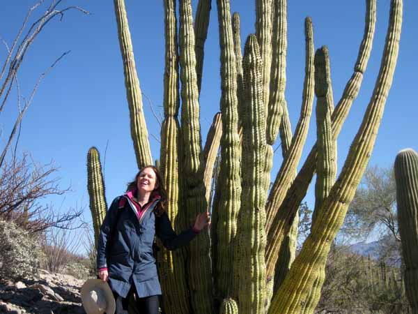 15-01-02 Organ Pipe Cactus NM -007