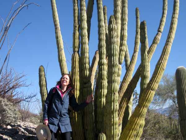 15-01-02 Organ Pipe Cactus NM -007