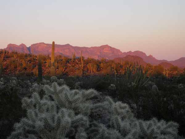 15-01-02 Organ Pipe Cactus NM -011