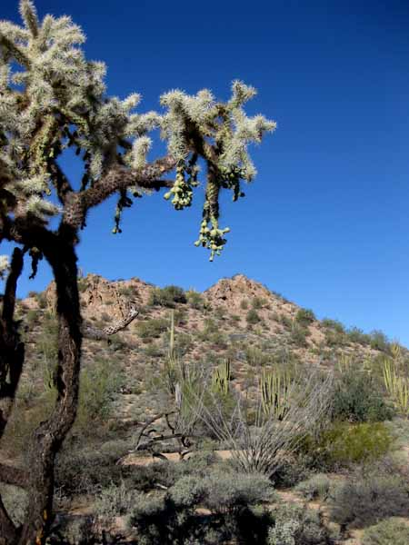15-01-03 Organ Pipe Cactus NM -001