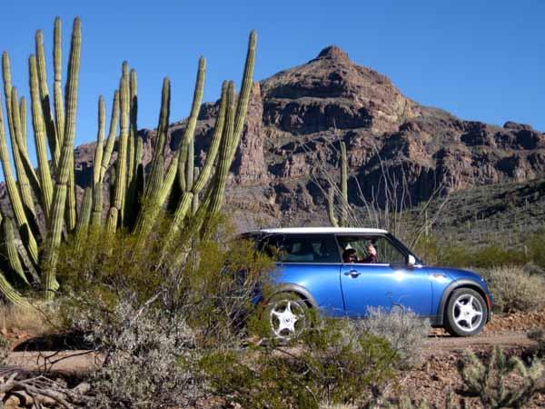 15-01-04 Organ Pipe Cactus NM -004