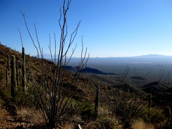 15-12-21 Saguaro NP (West) Wasson Peak Ranger Led Moonlight Hike -002