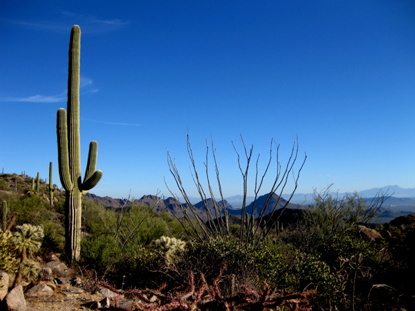 15-12-21 Saguaro NP (West) Wasson Peak Ranger Led Moonlight Hike -011