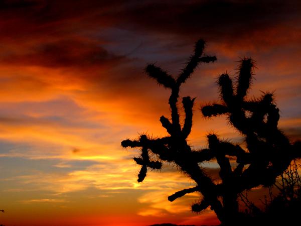 15-12-21 Saguaro NP (West) Wasson Peak Ranger Led Moonlight Hike -017