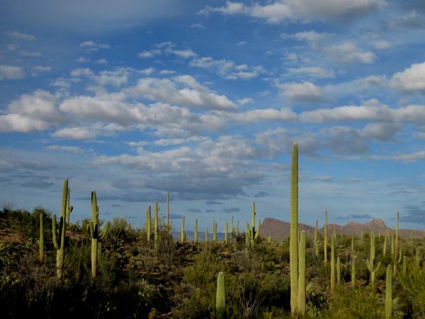 15-12-24 Saguaro NP (West) Signal Hill -003