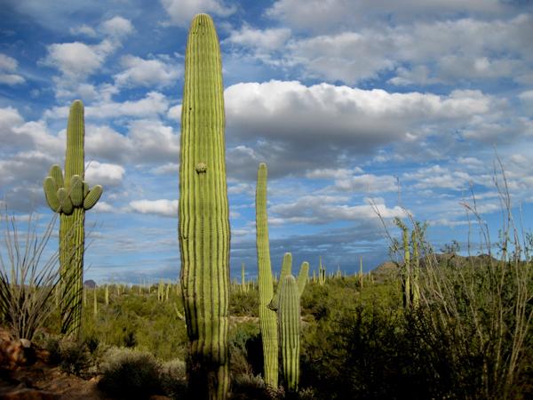 15-12-24 Saguaro NP (West) Signal Hill -005