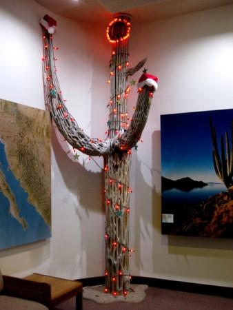 15-12-24 Saguaro NP (West) Signal Hill -015