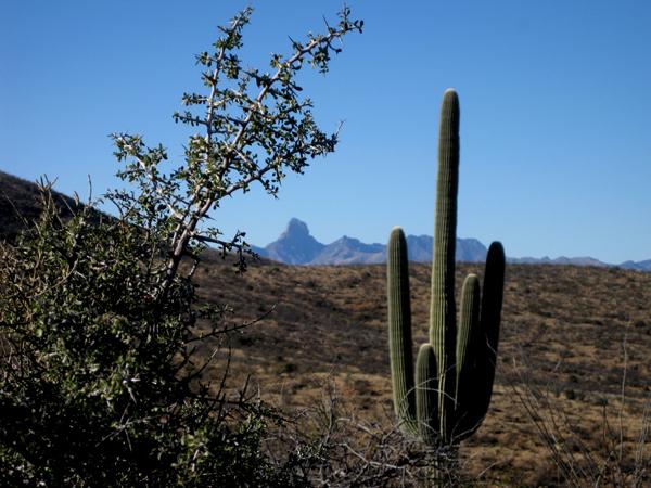 15-12-27 Buenos Aires NWR Mustang Trail to El Cerro -002