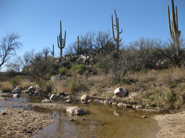 16-01-02 Catalina State Park -010