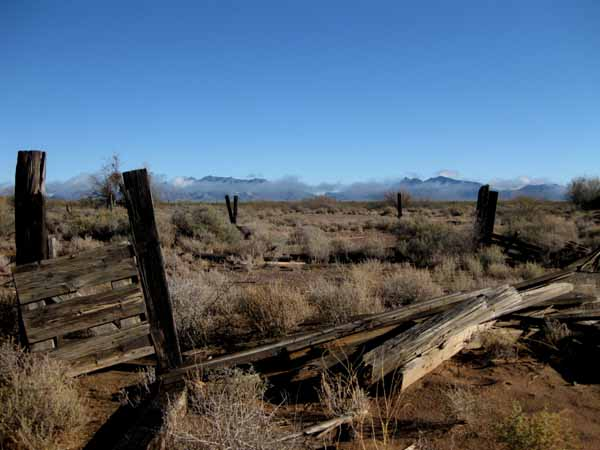 16-01-06 Organ Pipe Cactus NM -013