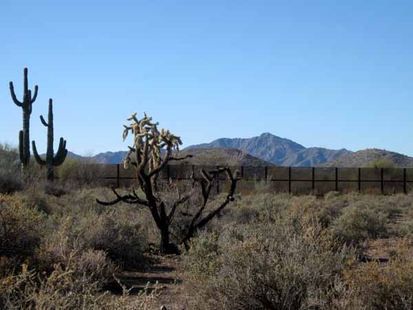 16-01-06 Organ Pipe Cactus NM -016